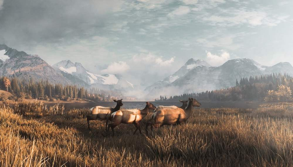 The Hunter Call of the Wild — все коллекционные предметы на карте озер Лейтон