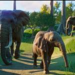 Planet Zoo - где найти загруженную музыку и обои