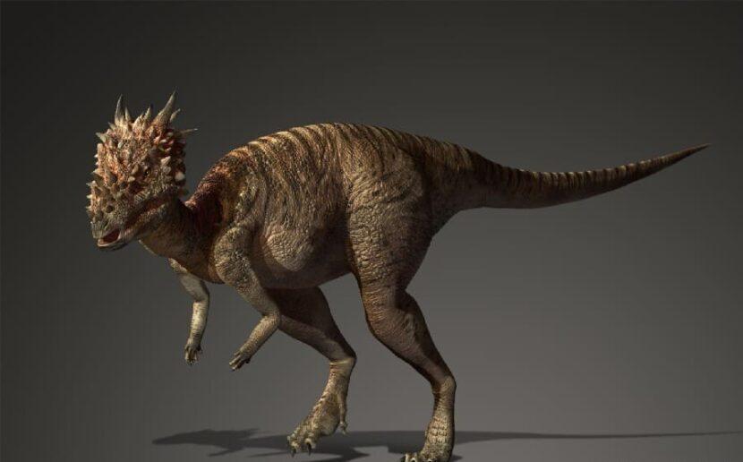 Дракорекс